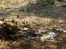 Trockenes Gras, stark umsponnenes Netz Lizenzfreie Stockfotografie