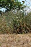 Trockenes Gras und Anlagen im Garten lizenzfreie stockfotografie