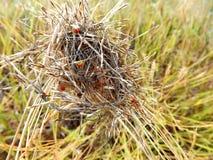 Trockenes Gras und Insekten Stockfoto