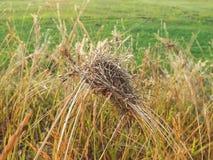 Trockenes Gras und Insekten Stockbild