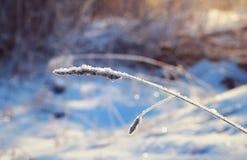 Trockenes Gras unter dem Schnee Lizenzfreie Stockfotografie