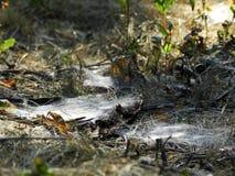 Trockenes Gras wird in den starken Netzen eingewickelt Stockbild