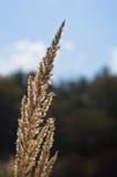 Trockenes Graslandgras gegen blauen Himmel mit weißen Wolken am Sommer Lizenzfreies Stockfoto