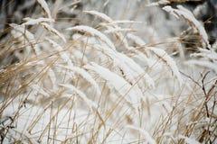 Trockenes grass.winter Lizenzfreies Stockfoto