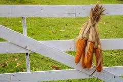 Trockenes Hängen des Mais Lizenzfreies Stockfoto