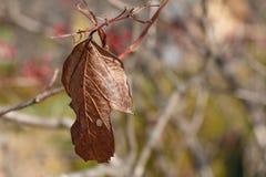 Trockenes Herbstblatt Stockbilder