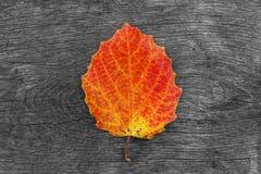 Trockenes Herbstblatt auf hölzernem Hintergrund Die Änderung der Jahreszeit Lizenzfreie Stockbilder