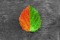 Trockenes Herbstblatt auf hölzernem Hintergrund Die Änderung der Jahreszeit Stockfotografie