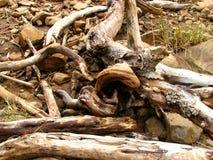 Trockenes Holz Stockbild