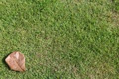Trockenes Laef und Gras Lizenzfreies Stockbild