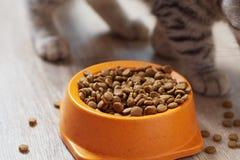 Trockenes Lebensmittel für Katze stockbilder