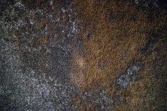 Trockenes Moos auf einer Wand stockfotografie