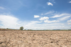 Trockenes Reisreisfeld mit Hintergrund des blauen Himmels am Nachmittag an der Spottschrift Thailand und am Baum Stockfotos