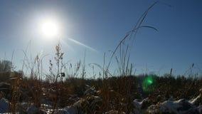 Trockenes Schattenbildgras des Winters in der Schneeweidelandschafts-Schneenatur stock video footage