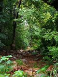 Trockenes und felsiges Flussbett in einem üppigen grünen Wald lizenzfreie stockbilder