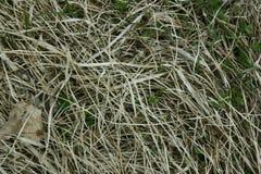 Trockenes und grünes Gras aus den Grund lizenzfreie stockfotos