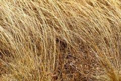 Trockenes und totes kleines Gras Lizenzfreie Stockfotografie