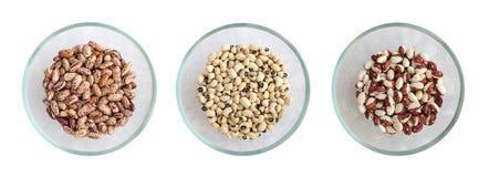 Trockenes Weiß und Pinto Beans in den runden Glasschüsseln lokalisiert stockfotografie