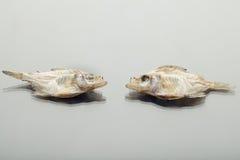 Trockenfisch lokalisiert auf weißem Hintergrund Lizenzfreie Stockfotos
