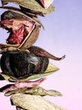 Trockenfrüchte Stockfotos