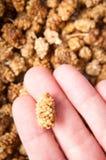 Trockenfrüchte in der Hand Stockfotografie