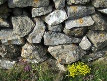 Trockenmauer mit wilden Blumen lizenzfreie stockfotos