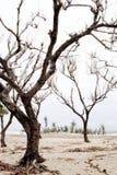 Trocknen Sie Baum Lizenzfreies Stockfoto