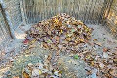 Trocknen Sie Blätter Stockfotos
