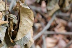 Trocknen Sie Blätter Lizenzfreies Stockfoto