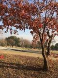 Trocknen Sie Blätter auf Baum mit trockenem Gras und blauem Himmel des freien Raumes stockbild