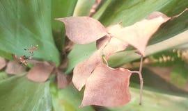 Trocknen Sie Blätter auf einem Spinnennetz Stockfotos