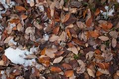 Trocknen Sie Blätter aus den Grund stockbilder