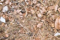 Trocknen Sie Blätter aus den Grund Stockbild