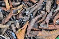 Trocknen Sie Blätter in der wirklichen Farbe stockbild