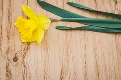 Trocknen Sie Blätter einer Anlage auf dem alten befleckten grungy Papier Gelbe Narzisse auf einem alten Holztisch stockfoto