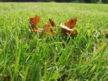 Trocknen Sie Blätter im grünen Gras Lizenzfreie Stockfotos