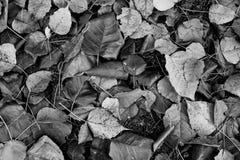 Trocknen Sie Blätter im Park lizenzfreie stockfotos