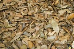 Trocknen Sie Blätter im Wald Stockfotos