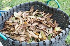 Trocknen Sie Blätter und Behälter Stockfotos