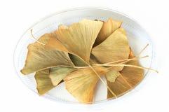 Trocknen Sie Blätter von Gingko biloba Stockfoto