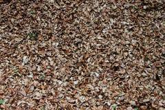 Trocknen Sie Blätter auf dem Boden Stockfoto