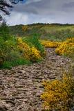 Trocknen Sie das felsige Bachbett, das mit gelben wilden Blumen angegrenzt wird Lizenzfreies Stockfoto