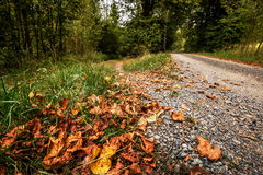 Trocknen Sie die Blätter, die auf den Waldweg gefallen werden Lizenzfreie Stockfotos