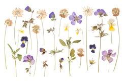 Trocknen Sie die gepressten wilden Blumen, die auf Weiß lokalisiert werden Stockfoto