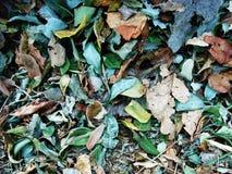 Trocknen Sie die zerstreuten Blätter stockbilder