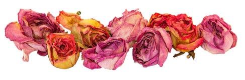 Trocknen Sie empfindliche rosafarbenen Blumen und die Blätter, die auf Weiß lokalisiert werden Stockbild
