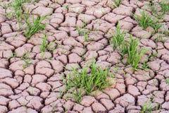 Trocknen Sie Felder an Dahla-Oase Lizenzfreies Stockfoto