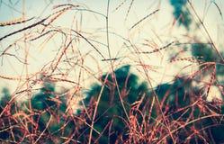 Trocknen Sie Feldgrashintergrund Stockbild