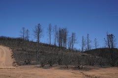 Trocknen Sie gebrannten Kalifornien-Abhang, der durch ein Waldverheerendes feuer verkohlt wird und verwüstet ist stockfotos