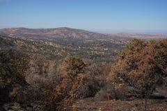 Trocknen Sie gebrannten Kalifornien-Abhang, der durch ein Waldverheerendes feuer verkohlt wird und verwüstet ist stockfoto
